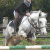horses-addiction