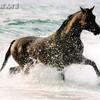 mon-monde-les-chevaux