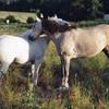 rainbow-horse