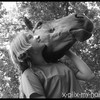 x-piix-my-horse-x