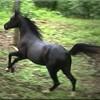 x-Liebe-Pferde-Yaoi-x