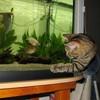 Passion-poissons