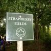 strawberry-fields-o8