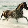 jenny-li-horse