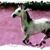 mes-chevaux-dendurance83