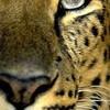 animauxdumonde31