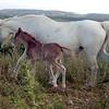 chevaux-ouveillan