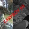 carpboy69