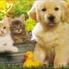 la-fille-des-chats