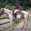 mazelle-horse