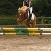 Just-magnifique-horse