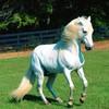 chevauxdu13700
