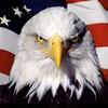 eagle5172