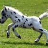 chevo-ponys