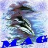 daup-mag