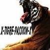 x-tigre-passion-x