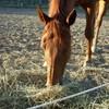 i-love-horse-du-13