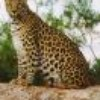 animaux412