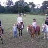 xxx-hellO-chevaux-xxx