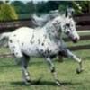 horses-love