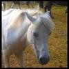 xx-horse-pix-xx