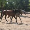 chevauxmerveille