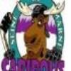 colo-caribou