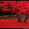 Fall-Spring