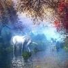 i-love-equitationdu27