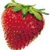 le--temps--des--fraises
