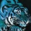 love-tigres