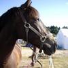 les-chevaux-en-image