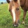 rend-ton-cheval-celebre