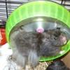 x7-hamsters