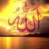 hob-allah