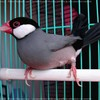 oiseauxexotiques1