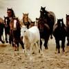 exeptionel-horse