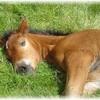 chevaux-en-detresse