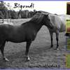 x-paradiz-horses-x