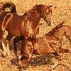 love-horse8301