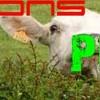 Moutons-Piates