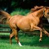 Passion-du-cheval-x3