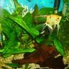 aqualand-passion-poisson