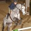 cheval-je-taime