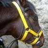 Bl0g-S0ndaGe-Horse