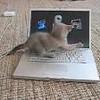 les-chats-font-du-stop