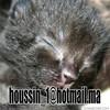 houssin789