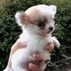 dogspassion82