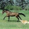 les-magic-horse