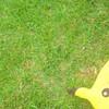 KiilL-Pikachu